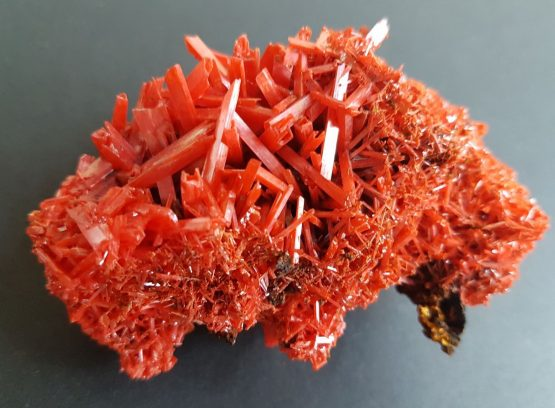 Superb druse of Crocoite prismatic crystals.