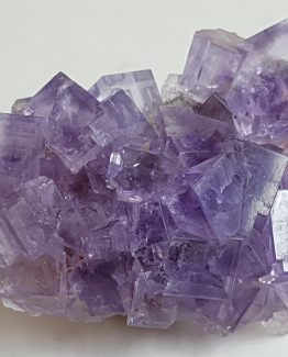 Group of excellent cubic crystals of violet Fluorite.