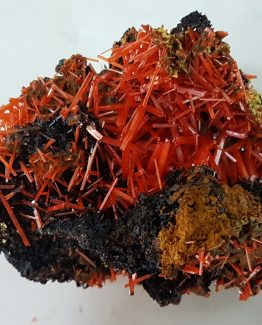 Delicate Crocoite specimen with small and very thin crystals.